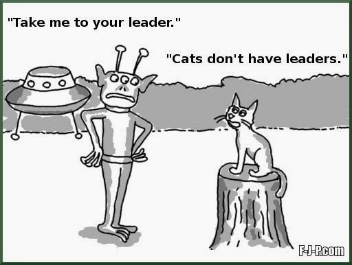 World S Funniest Cat Cartoons Funny Joke Pictures