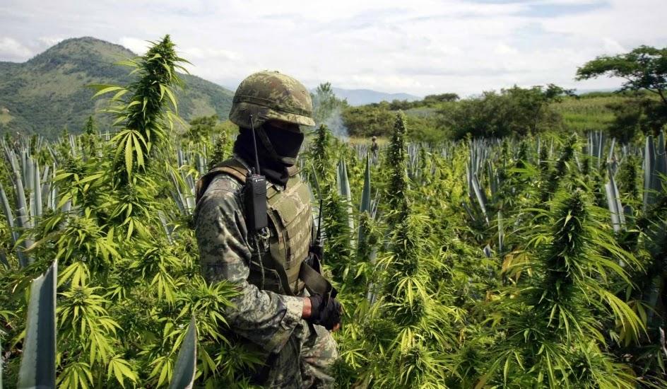 política lucha contra las drogas narcotrafico