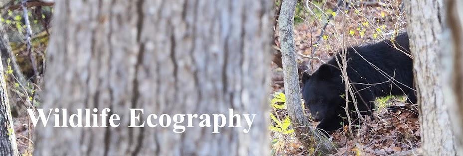 Wildlife Ecography