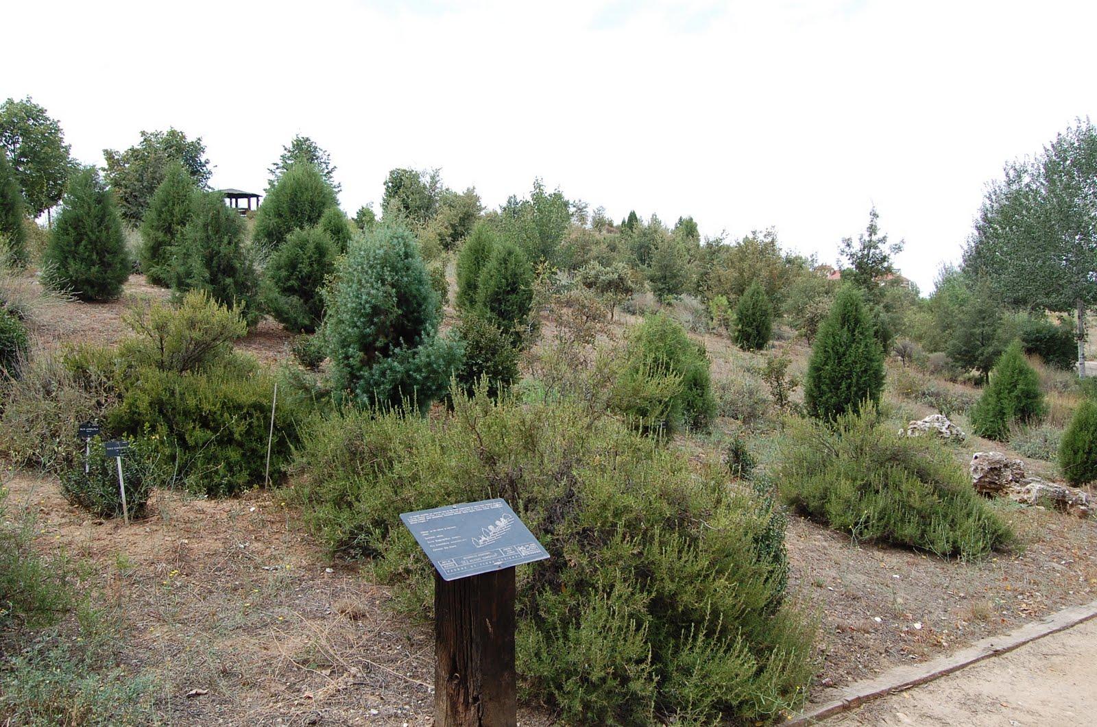 Jard n bot nico de alcal de henares su historia for Caracteristicas de un jardin botanico