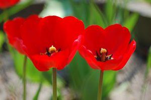 7 Bunga Cantik yang Ternyata Lambang dari Kematian