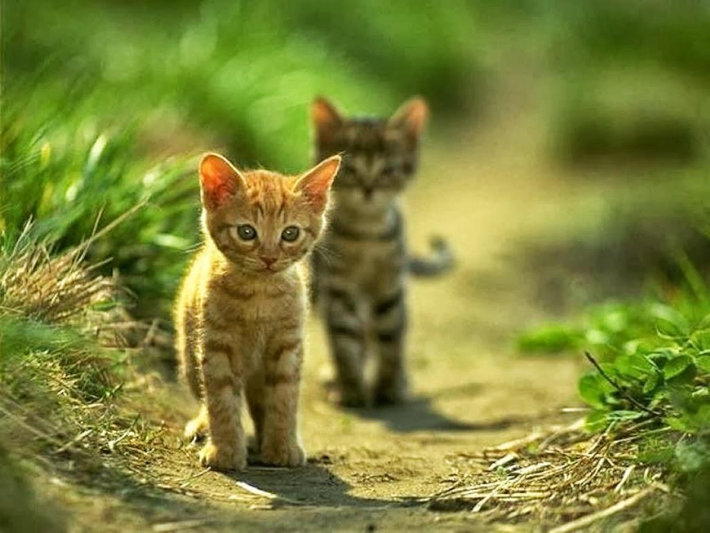 Gambar Kucing Keren godean.web.id