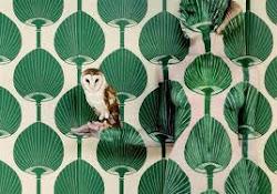 Owl - Emma Hack