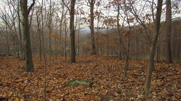garden ideas wooded areas