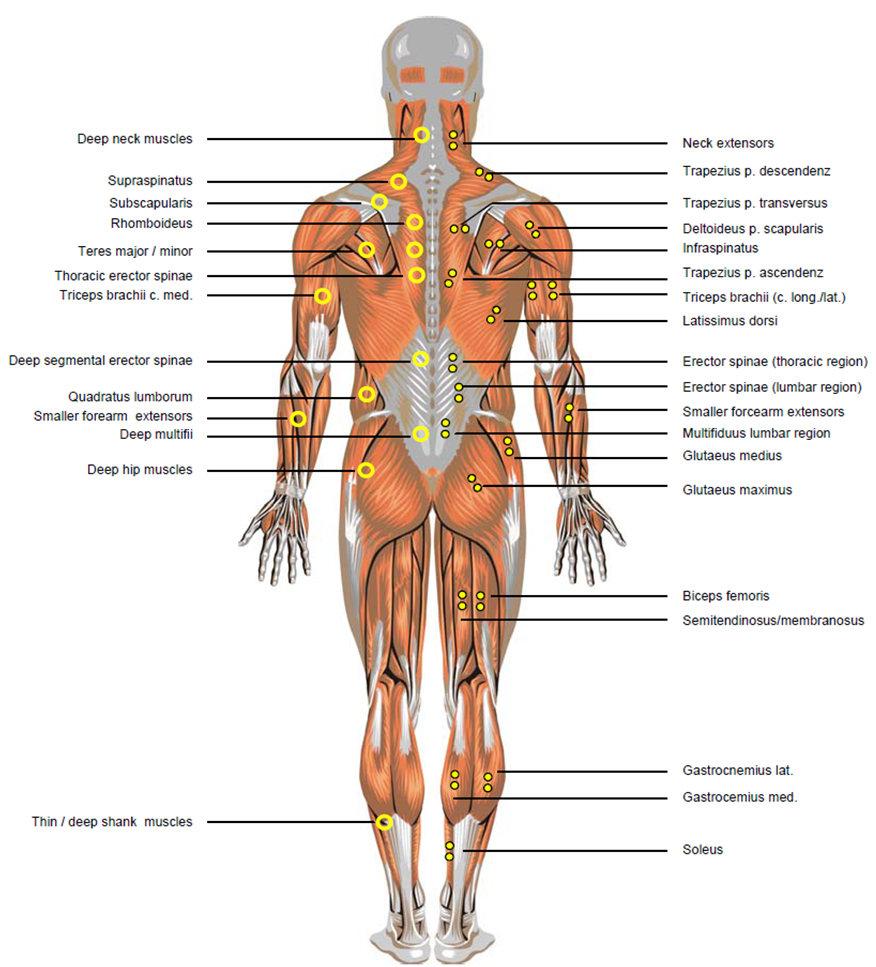 Cardio Trek Toronto Personal Trainer Anatomical Terms For Athletes