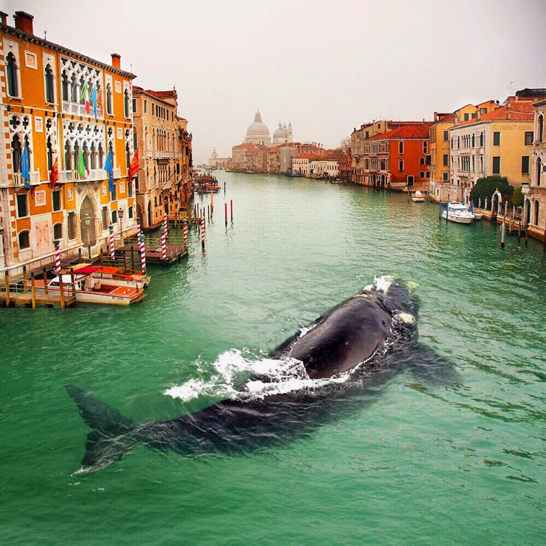 A Whale in Venice, Italy. Photo manipulation by Robert Jahns