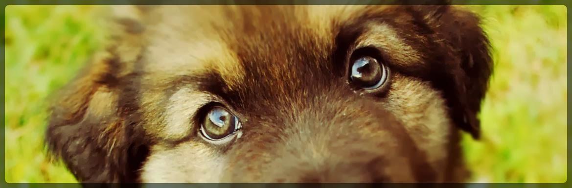 """""""Koerad pole terve minu elu, aga nad teevad mu elu täiuslikuks."""""""