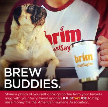 brew, canine, dog, Brim, coffee, American Humane Society, Tori Spelling, joe, twitter, instagram, facebook, #justsayjoe,