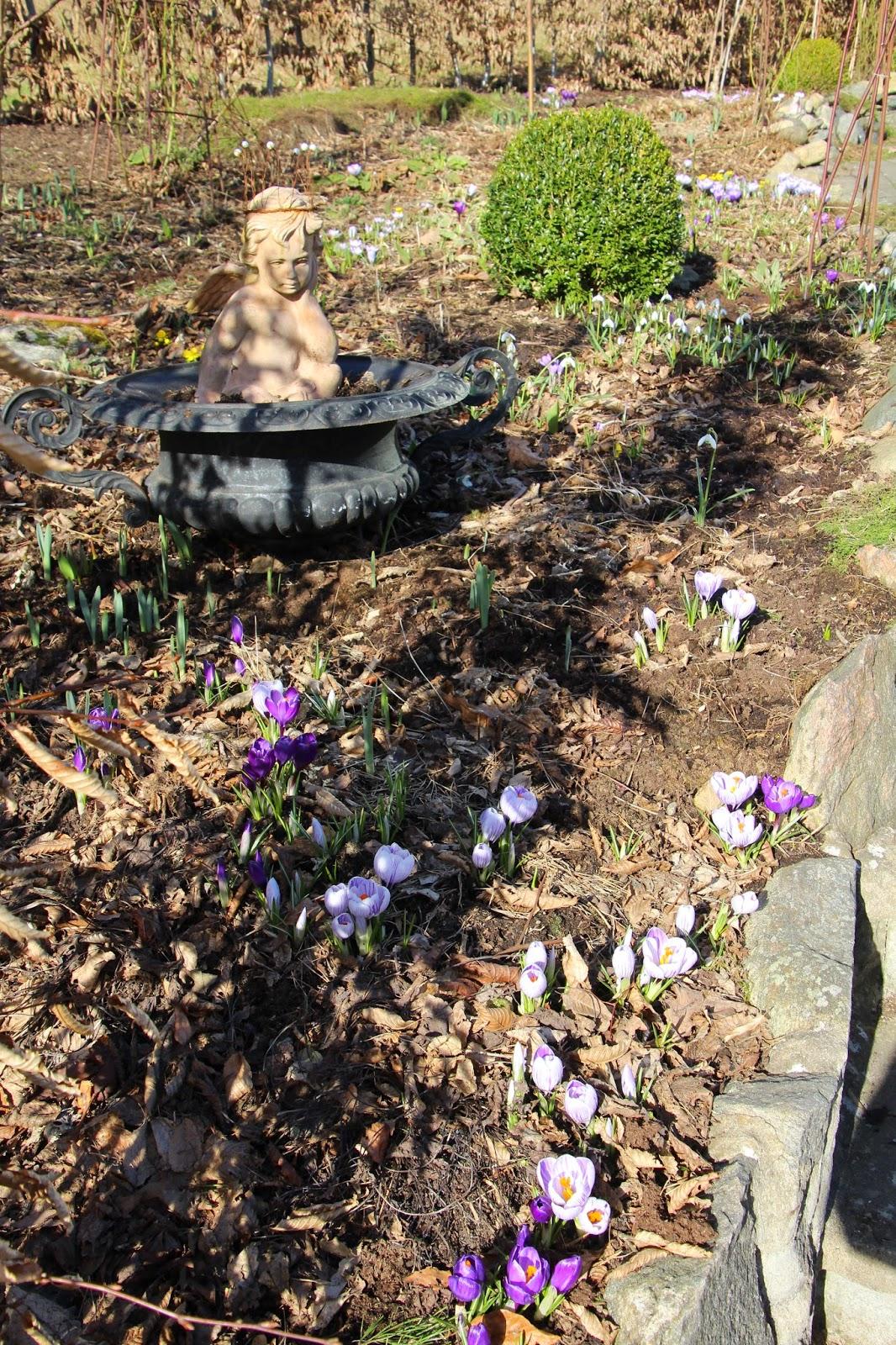 trädgård blogg vårblomning