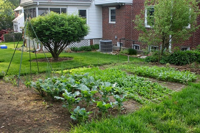 Backyard vegetable garden layout various for Veggie garden designs