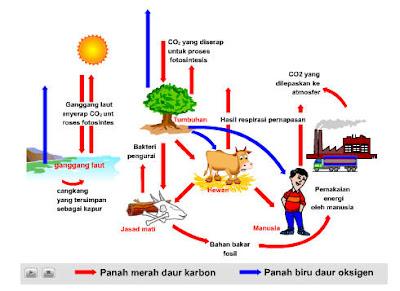 Gambar Siklus Karbon