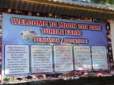 Turtle Farm at Tanjong Benoa Island Bali Indonesia