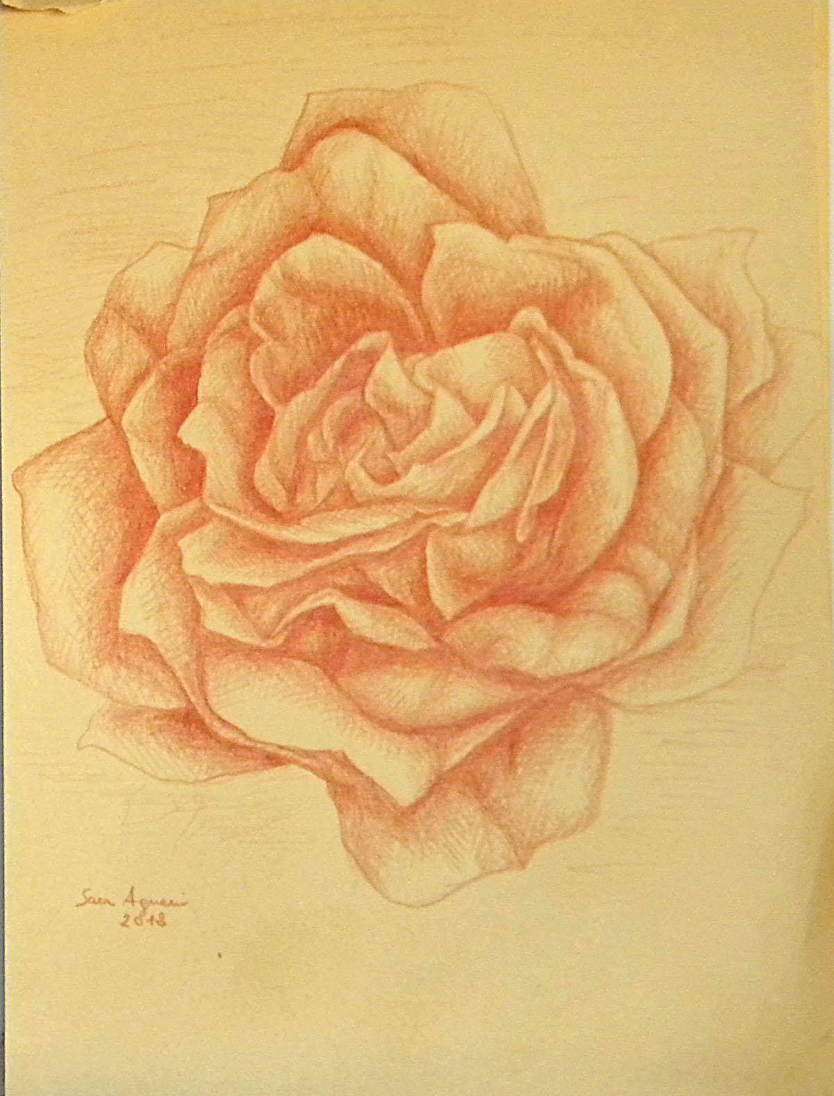 Dipinti disegni copie e rivisitazioni giugno 2012 for Cavallo disegno a matita