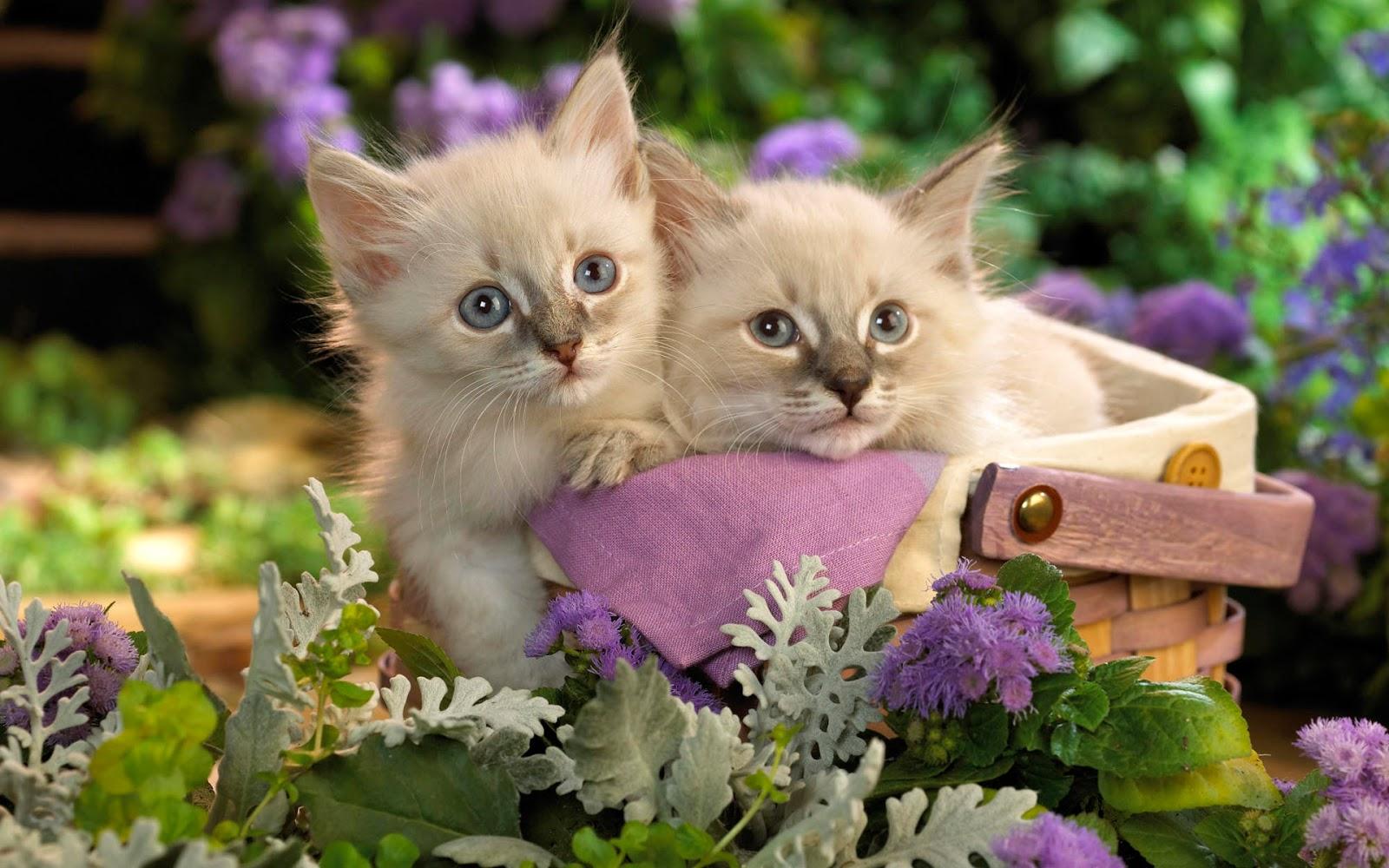 Пушистый кот в цветах фото
