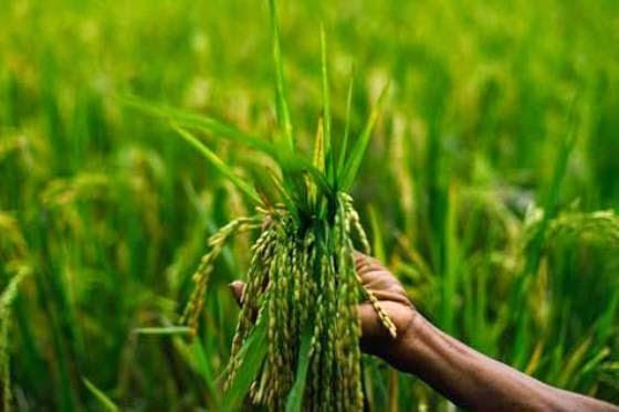 Kondisi Pertanian Indonesia Saat Ini