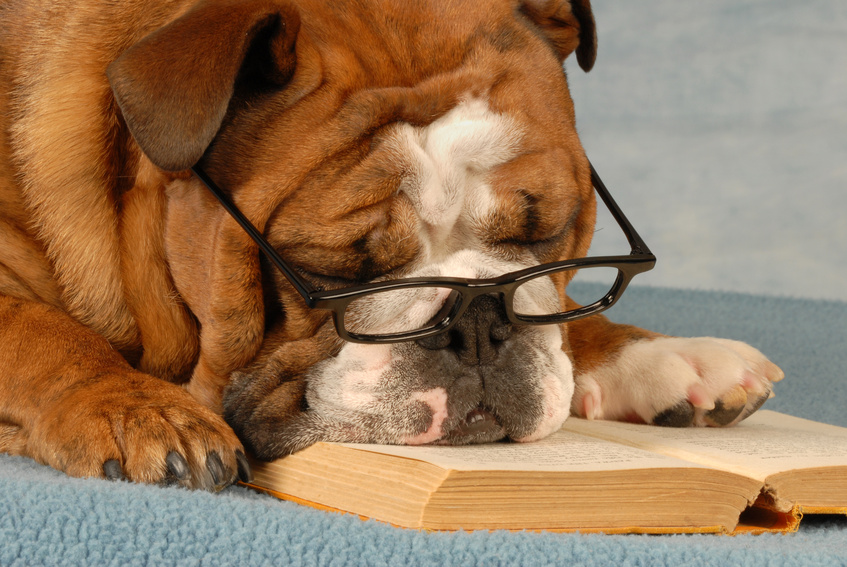 Microsoft Office Copyright Free Images. No Copyrights Claimed by Carla Cooper or Worship Melodies - Dog Reading a Book - MP900448575