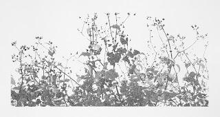 Richard Müller: Plantes poussant devant l'atelier 1