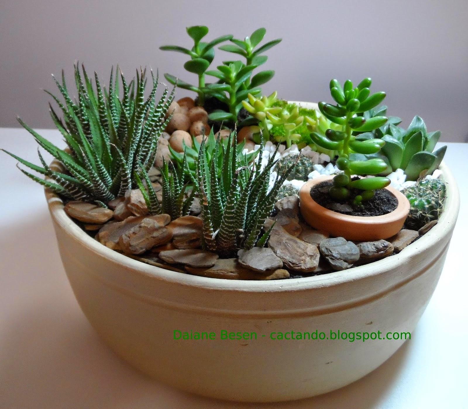 mini jardim de suculentas passo a passo : mini jardim de suculentas passo a passo:cuidados com as suculentas as plantas suculentas necessitam de