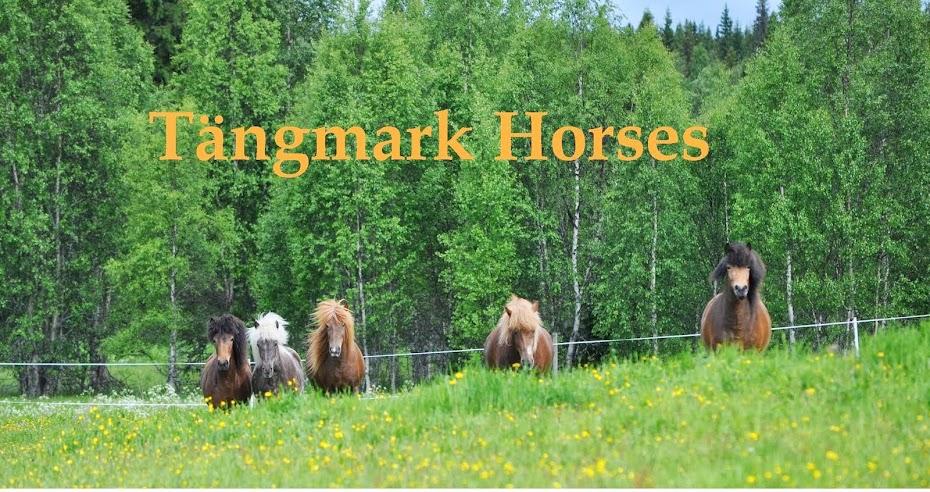 Tängmark Horses