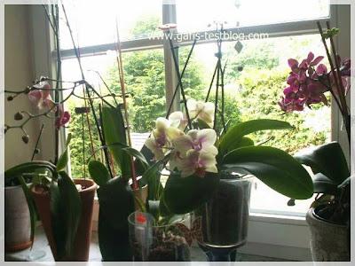 Orchideen Fenster