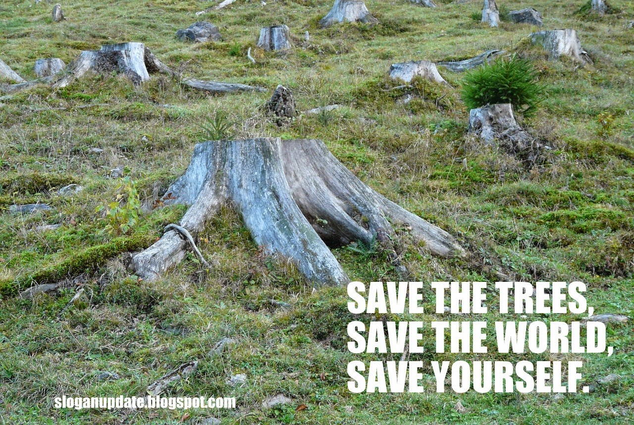 slogans on deforestation