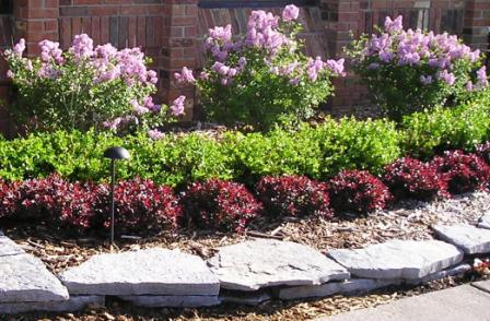LandZine Looking for just the right landscaping plant?