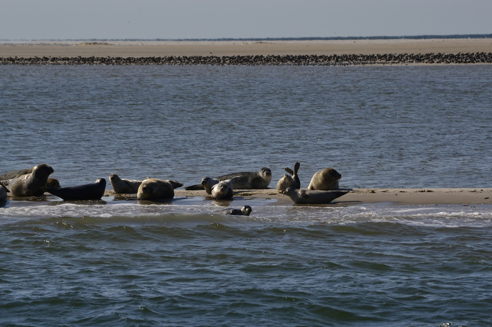 Wangerland: Robben, Watt und Meer