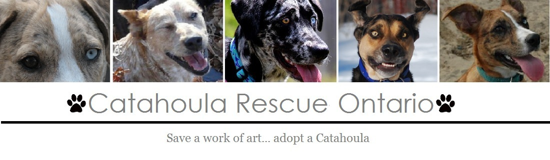 Catahoula Rescue-Ontario