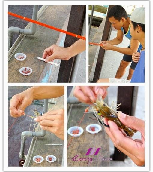 kranji farm resort prawning tips for beginners