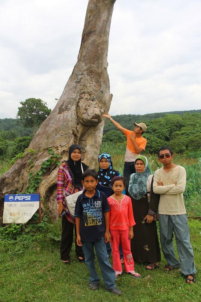 Pokok muka beruang