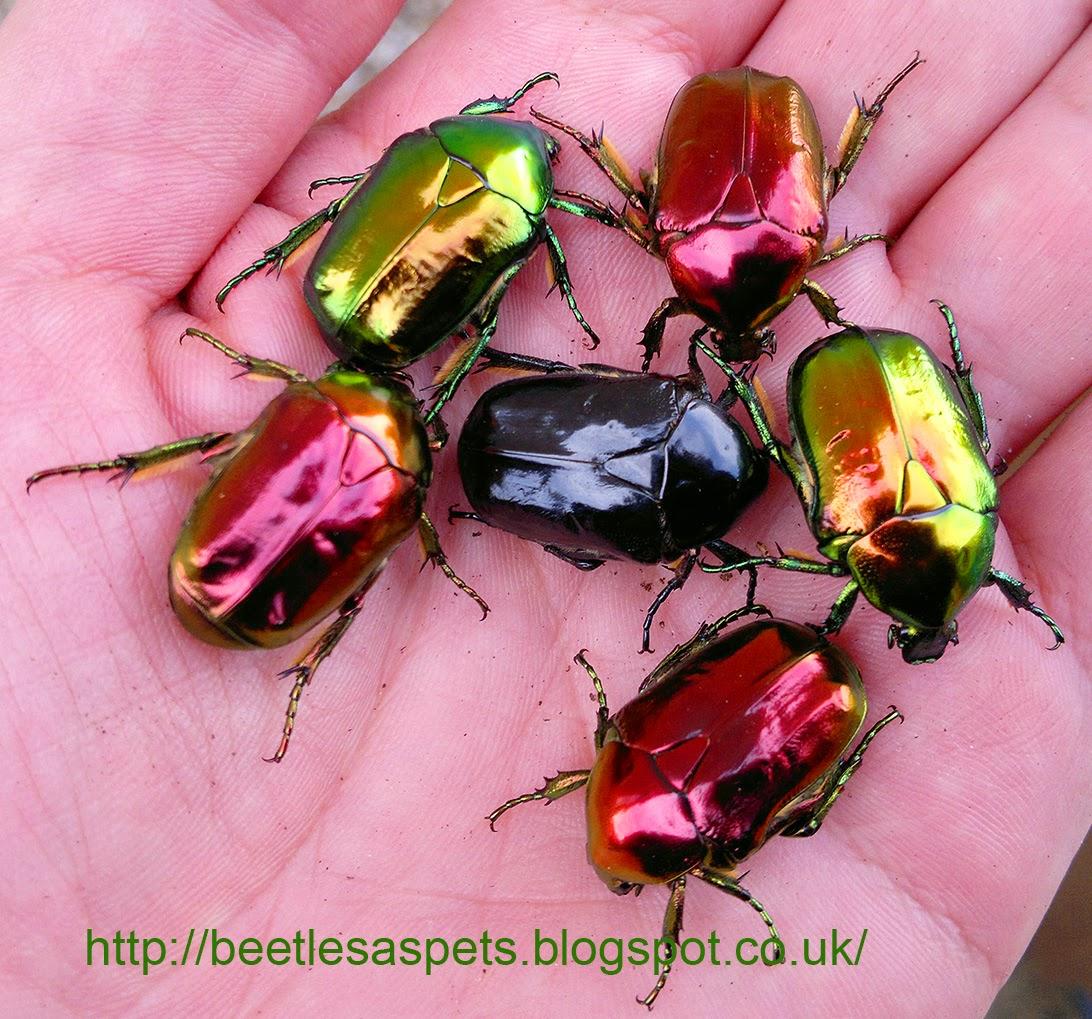 Tiny Beetles In Cat Food