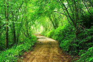 Parres, Camín de la Reina, sendero por zona boscosa