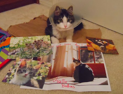 Cards &amp; Letterd for Anakin The Two Legged Cat