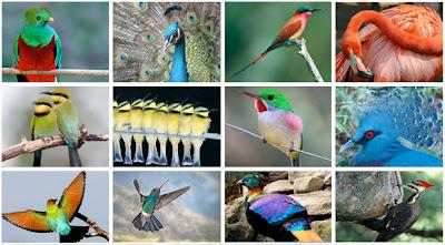 أجمــل وأغــرب الطيـور العـالـم3 Birds_Diversity_2011