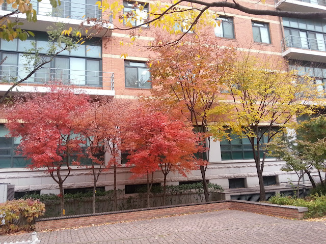 Red leaves at Seoul