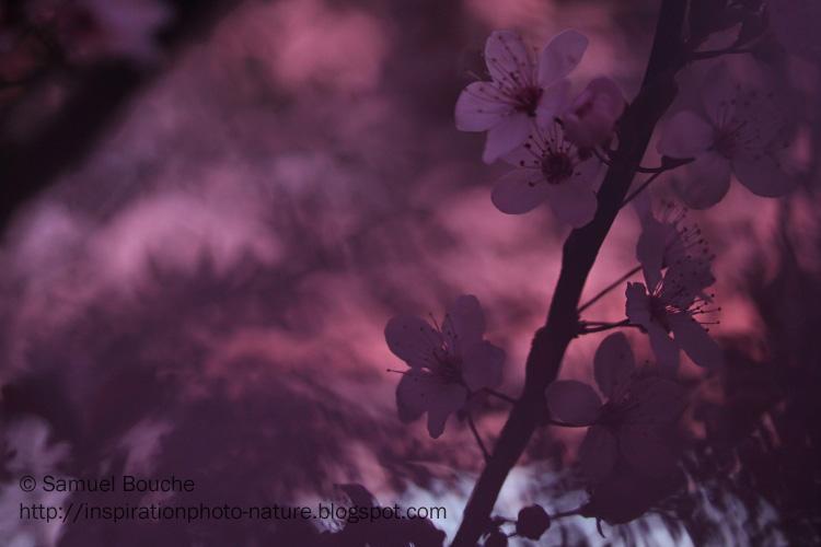 macro fleur samuel bouche
