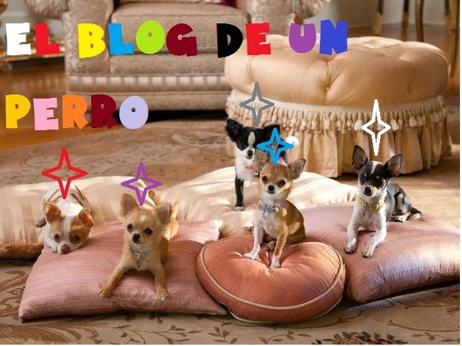 Blog de un perro