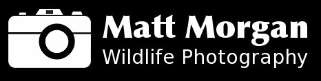 Matt Morgan Wildlife Photography