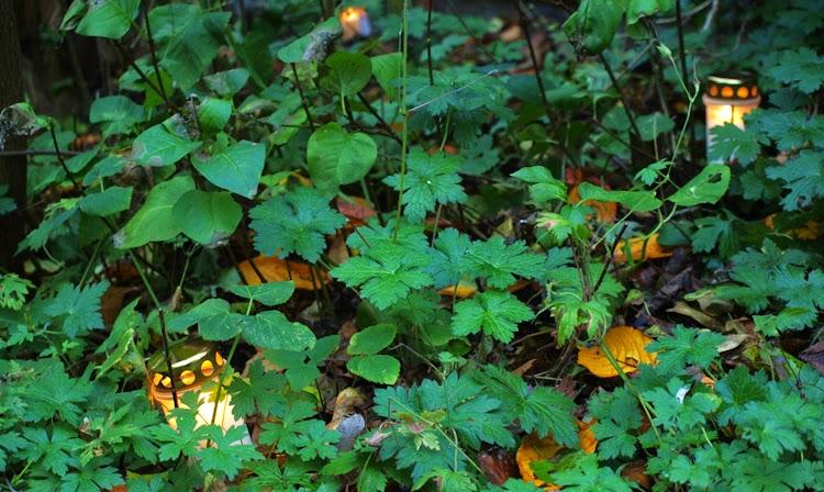 Bunddække med gravlys er simpelt men effektfuldt for uhyggen i haven til halloween