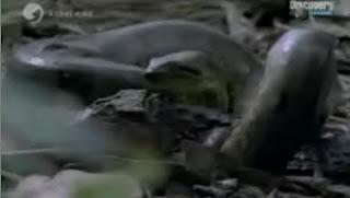 Anaconda Danger