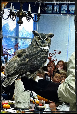 Chitters the Great Horned Owl