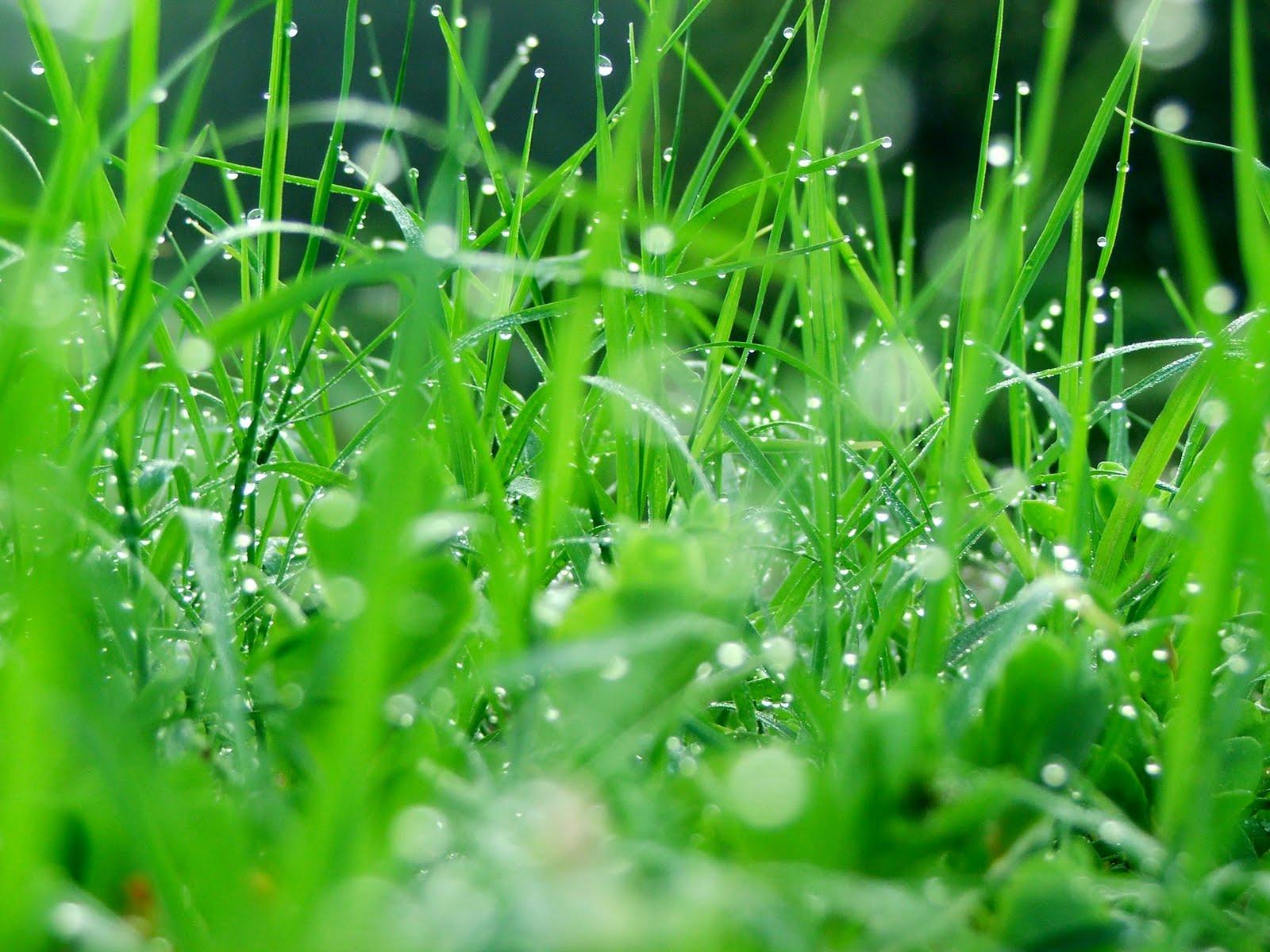 http://2.bp.blogspot.com/-w5YCde0wcN4/TbrUgSbraqI/AAAAAAAAA_Q/0kzHLxj4VXw/s1600/desktop-green-wallpaper.jpg