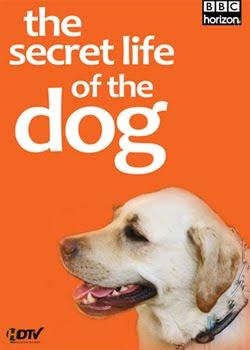 Filme Poster  BBC: A Vida Secreta dos Cães DVDRip RMVB Legendado