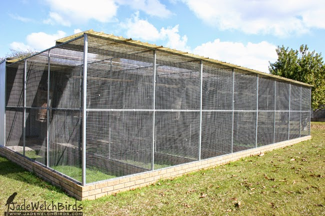 aviary aviaries gang gang cockatoo jadewelchbirds jade welch birds
