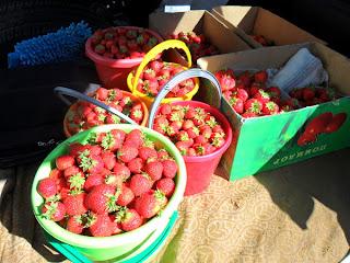 Разовый сбор ягод клубники