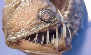 اكثر مخلوقات عالم البحار رعباً 1.jpg