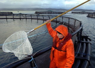 http://www.scotsman.com/business/food-drink-agriculture/new-fish-vaccination-research-gets-cash-injection-1-3847607