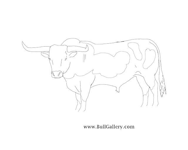 Kids Coloring Longhorn Bull