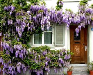 flores malvas que tapan la entrada a una casa