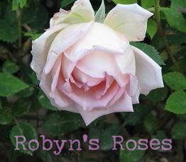My Rose Garden Diary
